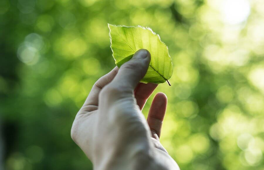 Fascinating Facts About Paper Sustainability